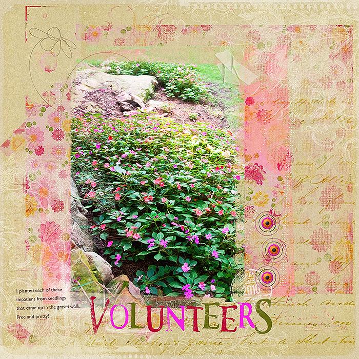 VolunteersW